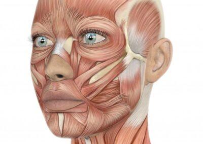¿Cómo Eliminar la Flacidez Facial